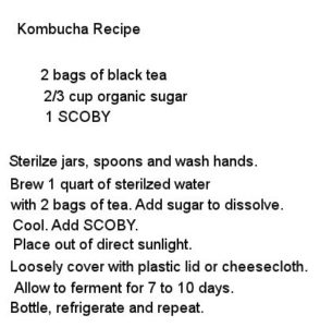 Kombucha SCOBY fermented tea recipe