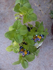 realistic embroidered butterflies in a plant pot